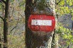 Schöner Baum mit Verkehrszeichen Stockbild