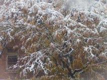 Schöner Baum schneebedeckt - Weihnachtspostkarte lizenzfreie stockbilder