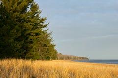 Schöner Baum und Gras zeichneten See in Michigan Lizenzfreie Stockfotos