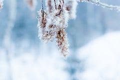 Schöner Baumast mit Eiskristallen und unten Stockfotos