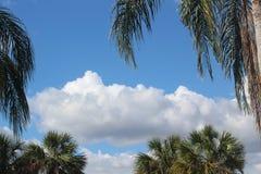 Schöner blauer Himmel Mauis, mit weißen geschwollenen Wolken u. grünen Palmen Stockbild