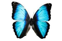 Schöner blauer Schmetterling lokalisiert auf weißem Hintergrund Lizenzfreies Stockbild