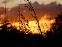 Schöner Blick ein Gras gegen einen Sonnenuntergang Lizenzfreies Stockfoto
