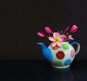 Schöner Blume Plumeria oder Frangipani in der Teekanne auf dunklem Schwarzem Lizenzfreie Stockfotos