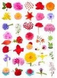 Schöner Blumen-Satz lokalisiert auf weißem Hintergrund Stockfotografie