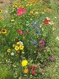 Schöner Blumengarten lizenzfreie stockfotos