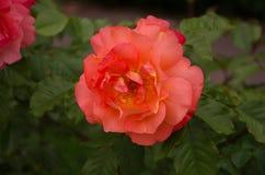 Schöner Blumengarten lizenzfreies stockfoto