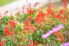 Schöner Blumengarten Blumen und Blätter gelb, rot und weiß stockbilder
