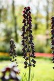 Schöner Blumengarten mit bunten blühenden Blumen Stockfoto