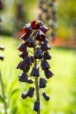 Schöner Blumengarten mit bunten blühenden Blumen Lizenzfreies Stockfoto