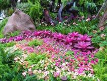 Schöner Blumengarten Orchideen-Garten stockbilder