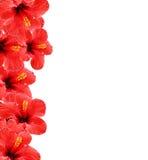 Schöner Blumenhintergrund Lizenzfreies Stockbild