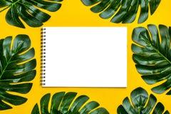 Schöner Blumenhintergrund des tropischen Baums verlässt monstera und Palme, Orchideenblume mit einem Raum für einen Text, flache  stockfotos