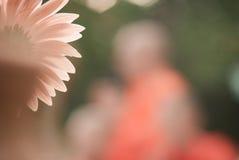 Schöner Blumenhintergrund im orange Ton Stockfotos