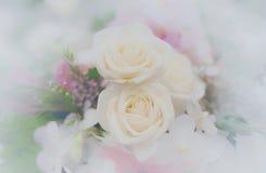 Schöner Blumenhintergrund/-tapete gemacht mit Farbfiltern Stockfoto