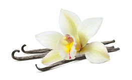 Schöner Blumenstock der Vanille lokalisiert auf Weiß stockfotografie