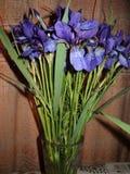 schöner Blumenstrauß der blauen Iris Lizenzfreie Stockfotografie
