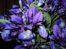 schöner Blumenstrauß der blauen Iris Lizenzfreie Stockfotos