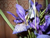 schöner Blumenstrauß der blauen Iris Stockbilder