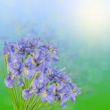 Schöner Blumenstrauß der blauen Iris auf dem grünen und himmlischen Hintergrund Stockfotos