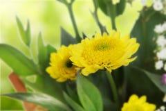 Schöner Blumenstrauß der Blumen Lizenzfreies Stockfoto
