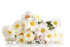 Schöner Blumenstrauß der Gänseblümchen Lizenzfreie Stockfotografie