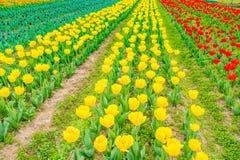 Schöner Blumenstrauß der Jahreszeit der Tulpen im Frühjahr stockfotos