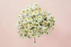 Schöner Blumenstrauß der Kamille Lizenzfreies Stockbild