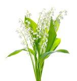 Schöner Blumenstrauß der Lilie die Talblume wird auf Weiß lokalisiert Stockbild