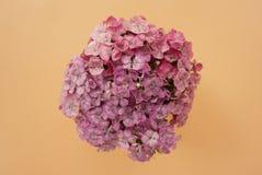 Schöner Blumenstrauß der rosa Gartennelke auf einem blassen Pfirsichpastellhintergrund Lizenzfreies Stockfoto