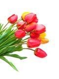 Blumenstrauß der Tulpen lokalisiert auf weißem Hintergrund. vertikales Foto. Stockfoto