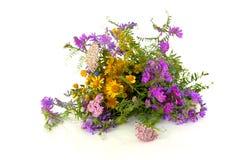 Schöner Blumenstrauß des wilden Waldes blüht auf einem weißen Hintergrund Lizenzfreies Stockbild