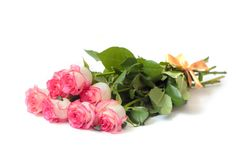 Schöner Blumenstrauß von beige Rosen mit einer rosa Grenze Stockbilder