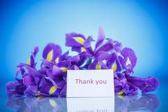 Schöner Blumenstrauß von Blumeniris Lizenzfreies Stockbild