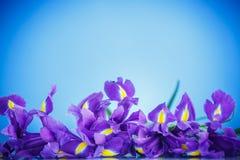 Schöner Blumenstrauß von Blumeniris Stockfotos