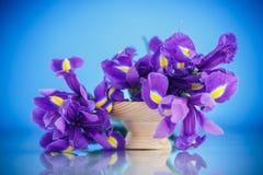 Schöner Blumenstrauß von Blumeniris Stockbild