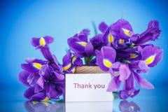 Schöner Blumenstrauß von Blumeniris Lizenzfreie Stockfotos