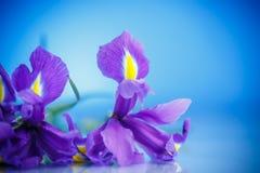 Schöner Blumenstrauß von Blumeniris Stockfoto