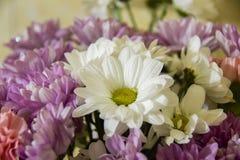 Schöner Blumenstrauß von Gänseblümchen für Geschenk stockbild