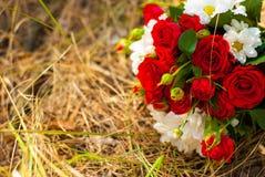 Schöner Blumenstrauß von hellen roten Rosen und von weißen Gänseblümchen Stockfoto