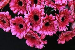 Schöner Blumenstrauß von purpurroten Blumen Stockfotos