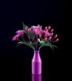 Schöner Blumenstrauß von purpurroten Eukalyptusblumen und -knospen in einem pur Lizenzfreie Stockbilder