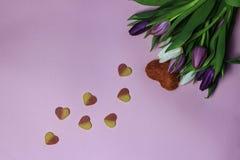 Schöner Blumenstrauß von purpurroten Tulpen auf rosa Hintergrund Lizenzfreie Stockbilder