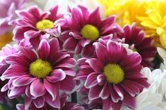Schöner Blumenstrauß von rosa, gelben und weißen Gänseblümchen stellte nahe Fenster ein Stockfoto