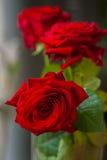 Schöner Blumenstrauß von roten Rosen mit Grüns für Frau und Braut, Hochzeit, Verpflichtungskonzept, Blumen Vertikaler Formgebrauc Lizenzfreie Stockbilder
