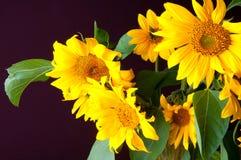 Schöner Blumenstrauß von Sonnenblumen Stockbild