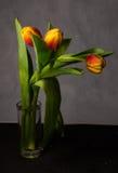 Schöner Blumenstrauß von Tulpen von verschiedenen Farben in den Tropfen Lizenzfreies Stockfoto