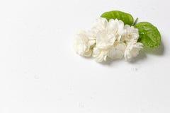 Schöner Blumenstrauß von weißen Jasminblumen Lizenzfreies Stockfoto