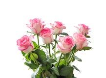 Schöner Blumenstrauß von weißen Rosen mit einer rosa Grenze Lizenzfreies Stockfoto