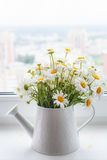Schöner Blumenstrauß von weißen wilden Gänseblümchen in einer weißen Gießkanne Stockbilder